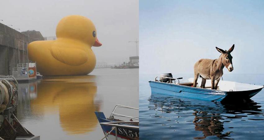 duckydonk
